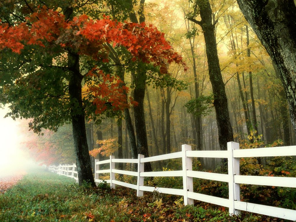 How to Choose the Right Fence Materials?